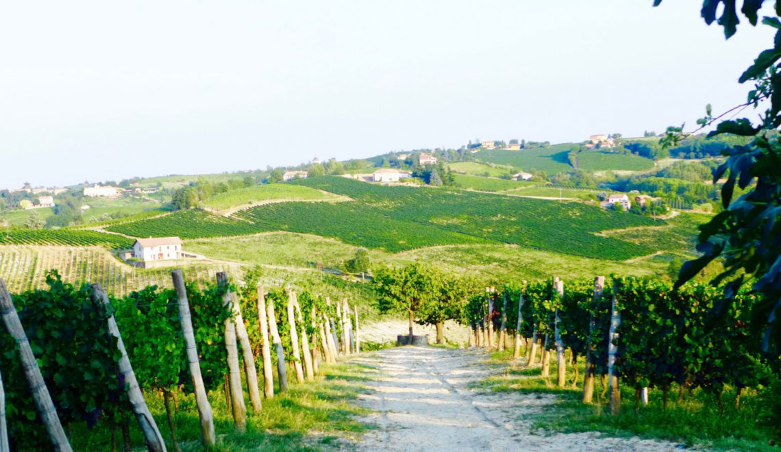 A Look Into Italy's Famed Winemaking Region